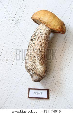 Organic food text and wild mushroom on the table