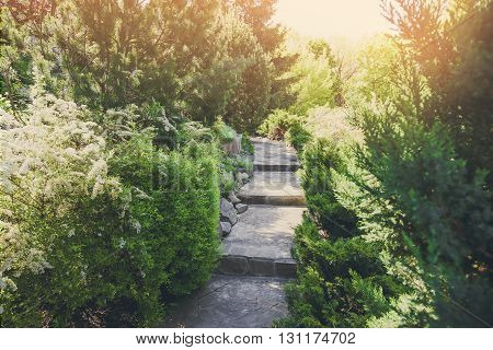 Beautiful landscape design, garden path with staircase in stone tiles, evergreen bushes, fir trees, blue spruces and shrubs in sunlight. Modern landscaping. Summer garden or park design.