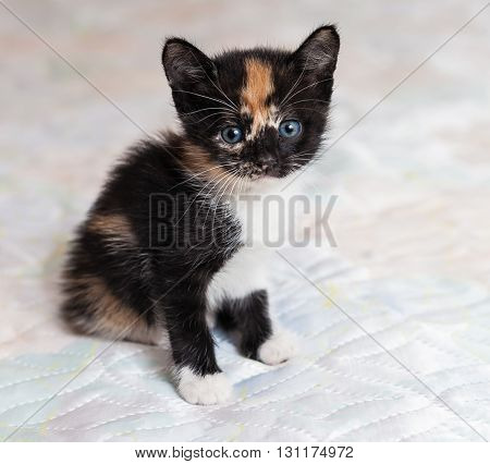 The charming little kitten sitting on a bed