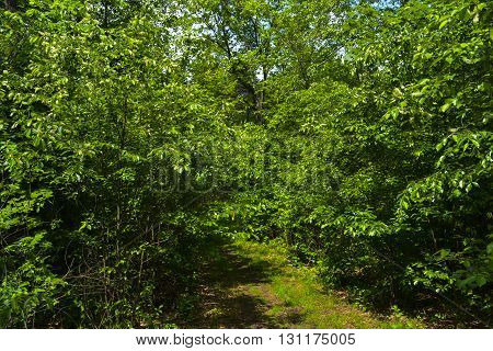 Walk in the spring forest on a sunny day