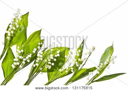Fragrant bouquet of lily of the valley on a white background. Blooming fresh lilies of the valley isolated on white   background.