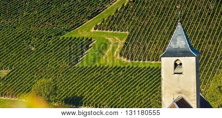 Champagne vineyards in the Cote des Bar area of the Aube department near to Viviers sur Artaut, Champagne-Ardennes, France, Europe