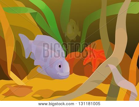 aquatic view with underwater animals and plants near bottom with sand and rocks on it, green, yellow and brown algae, starfish and exotic fishes