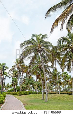 Palm trees on Aruba island in the Caribbean