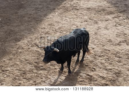 image of a bull on the street, at parties of a people