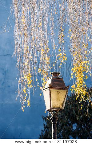 Old vintage street lamp lantern with yellow leaf tree in the background and beautiful blue wall