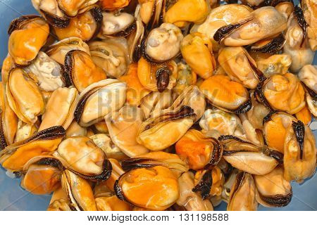 Bunch of Yellow Mussels Clams Sea Food