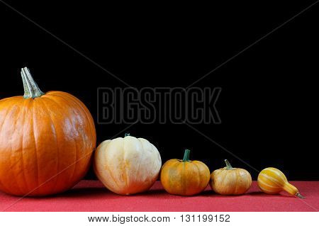 Several pumpkins in a line on black background