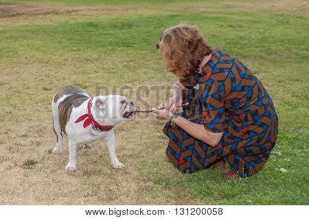 Female owner pulling on stick with pet English Bulldog.