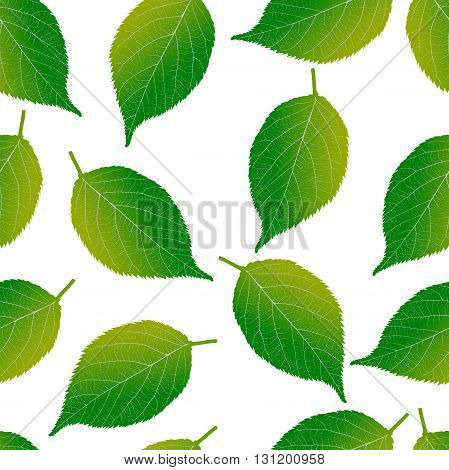Seamless pattern on a white background of green leaves