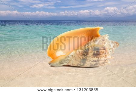Exotic shell on a warm tropical beach