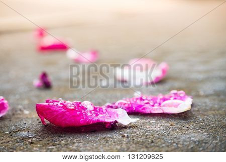 Water spill on Rose petals on the ground with blured background select focus.