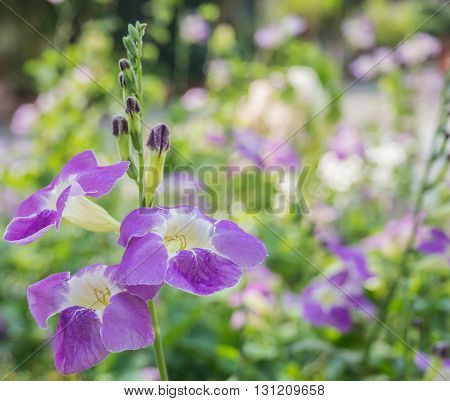 Group of violet flowers in nature with blur bokeh background.