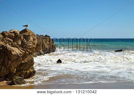 Seagull sitting on a rock in Malibu California
