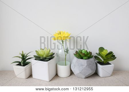 Variety of Succulent in pots and yellow flower in glass bottle home decoration