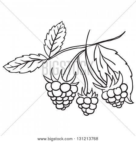 black and white blackberry cartoon