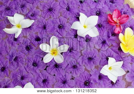 frangipani and purple flowers floating in water
