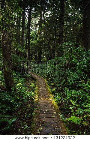 Forested trail in Tofino British Columbia Canada