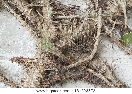 background nature roots wall brown texture beautiful