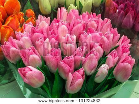 Tulip. Color tulips bouquet of tulips tulips in bouquet beautiful tulips colorful tulips.