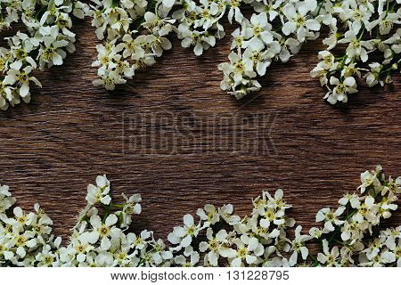 Branches of bird cherry on a wooden board. Border. Copy space. Vintage wood background. Texture.