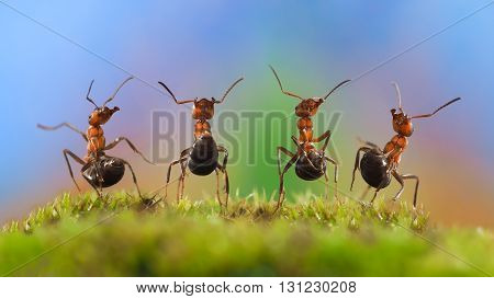 Four funny ant with their bellies. Ants dancing. Glade, moss. Beautiful rainbow background. The concept of performance, dance, show, concert