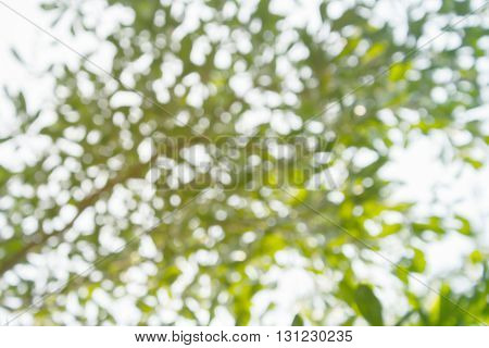 Look Up To Tree Bush View Nature Bokeh From Sunlight With Warm Mood