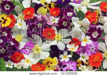 Floral background of spring flowers: Narcissus violet Phlox Apple blossom Pansy and others.