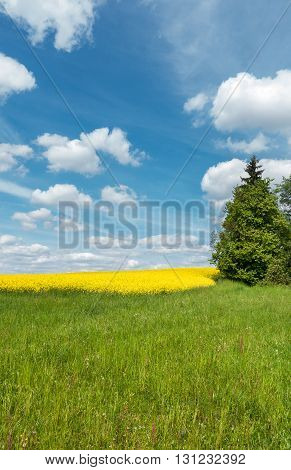 Spring Countryside With Green Meadow And Yellow Blooming Rapeseed