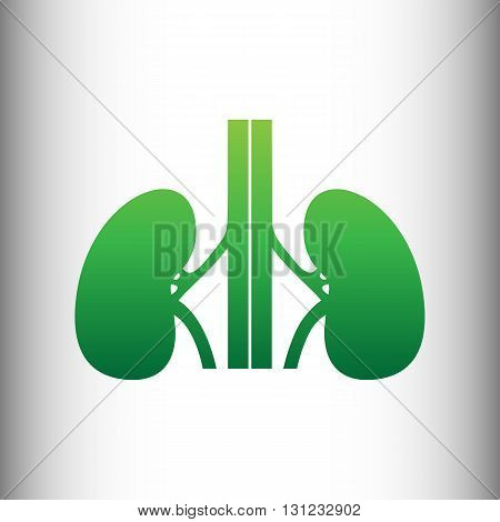 Human kidneys sign. Green gradient icon on gray gradient backround.