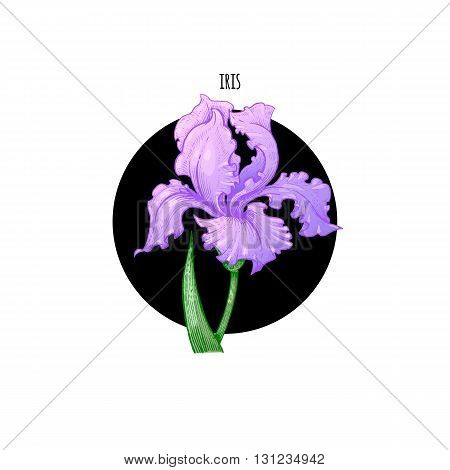Vector illustration iris flower in a black circle on a white background. Designed for packaging decoration flower arranging cosmetics shampoos health supplements.