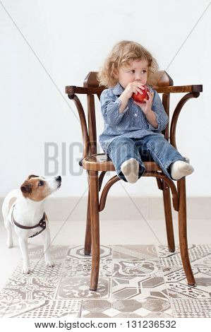 Little two year old girl eating big red apple while sitting in wood chair in studio indoors. Baby looking to the side. Near dog looking to the apple white wall background floor tiles with ornaments