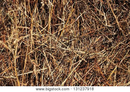 Close view of a stack of straw for a background