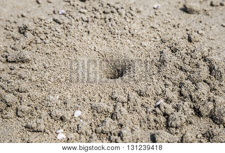 White crab cave on sand of a tropical beach