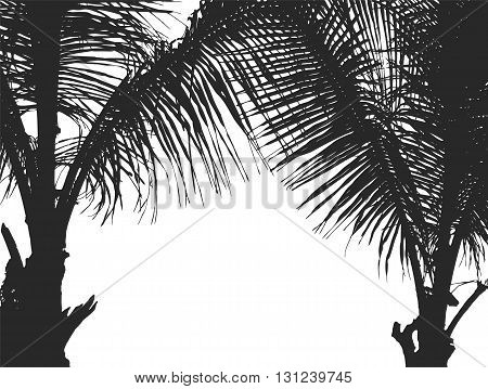 Silhouette two coconut trees isolated on white background vector