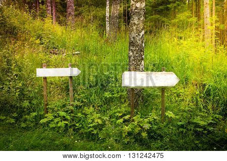 Two blank signs in the forest. Write your own text.