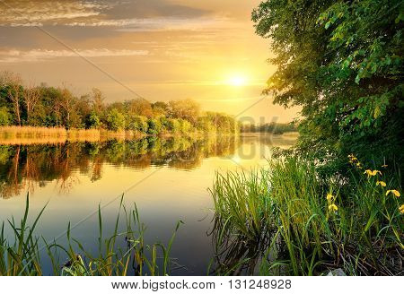 Bright yellow evening on a calm river in forest