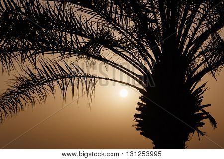 silhouette of branches of palm tree at sunrise