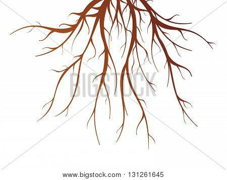 Brown tree root on white background flat isolated vector illustration