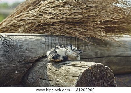 Little toy cat on grey beam and brush