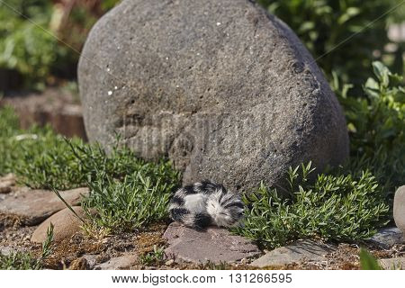litlle toy cat and big stone in garden