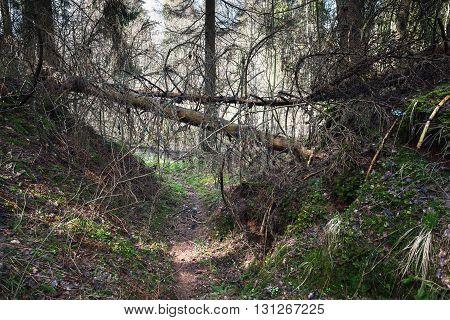 Dangerous Footpath In Dark Wild Forest