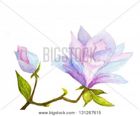 watercolor hand painted magnolia flower and bud on white