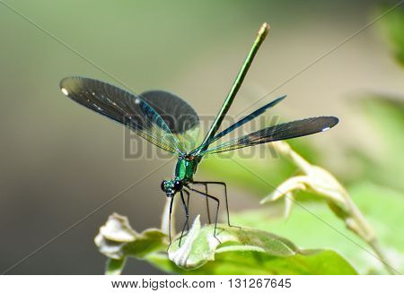 Green dragonfly with open wings, close-up, isolated.