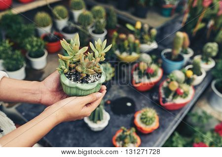 Close-up image of female hands holding flowerpot with succulent