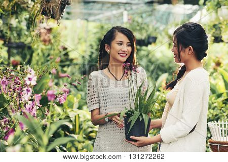 Young Asian woman consulting with orangery owner before buying orchid