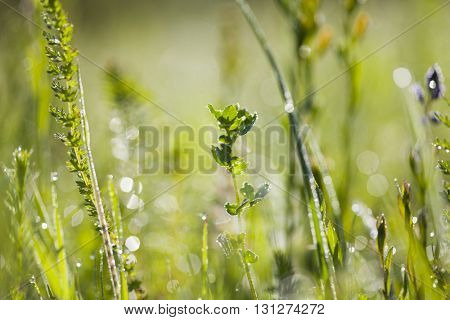 Abstract summer background of green grass with water drops