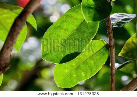 fresh and green leaves natural floral background
