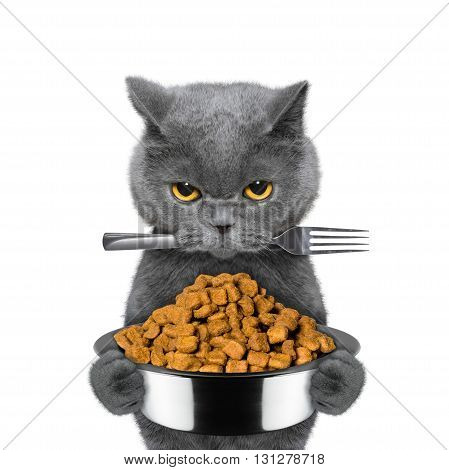 cat is hungry and keeps food and fork -- isolated on white