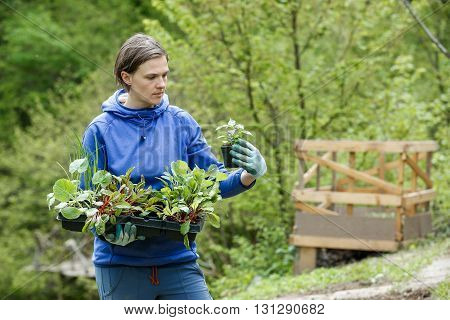 Woman gardener observing her seedlings collection prepared to be planted on her garden. Organic gardening healthy food self-supply and housework concept.